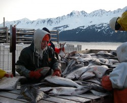 2008 Homer/Seward/Kodiak March Port Tour