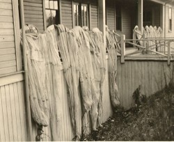 Drying nets at U. of W. IFC lab, 1929